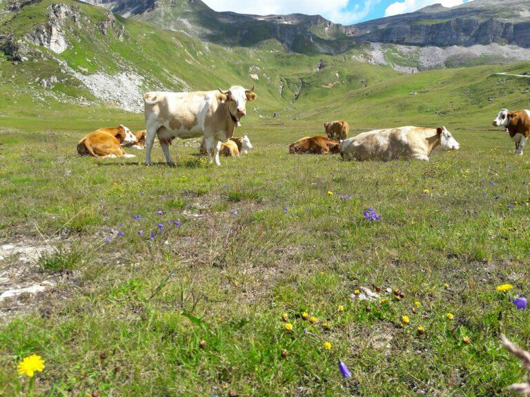 Kráva||Kráva||Zuzka Nemčíková